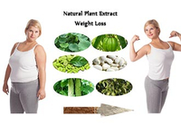 Hot Natural Plant Extract Weight Loss Products 2019