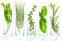China Natural Plant Extract Research Market