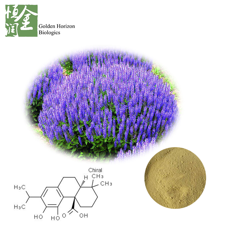 Carnosic Acid Sage Salvia Officinalis Extract