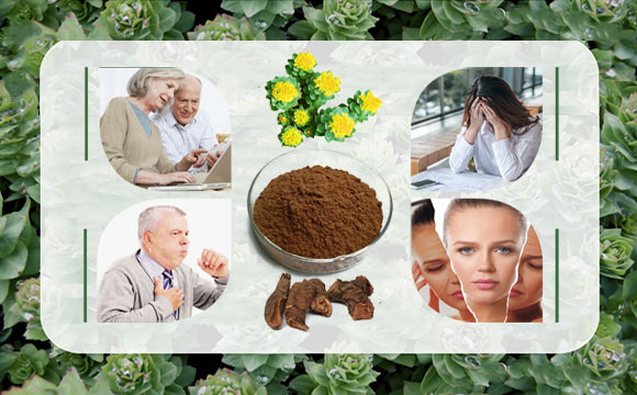rhodiola rosea extract effect 2