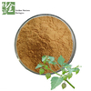 Natural Pure Physalis Angulata Extract Treating Diabetes Mellitus