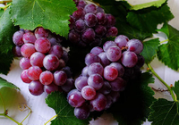 Study On The Effect Of Grape Extract